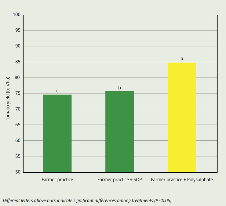 Average tomato yield when fertilized with Polysulphate increased by 14%