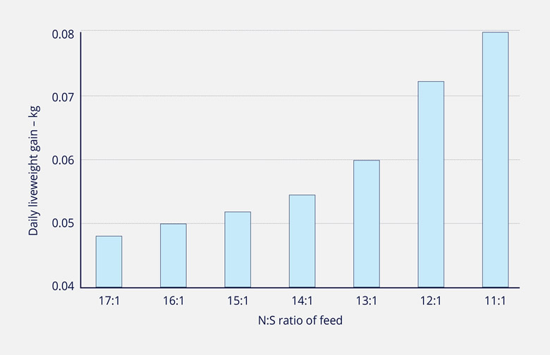 DAILY LIVEWEIGHT GAIN OF LAMBS INCREASES AS FEED N:S RATIO IMPROVES