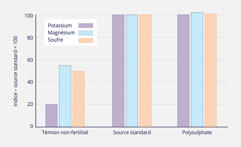 ABSORPTION COMPARATIVE DE NUTRIMENTS DE POLYSULPHATE PAR RAPPORT A DES SOURCES DE NUTRIMENTS STANDARD ET UN TEMOIN NON-FERTILISE
